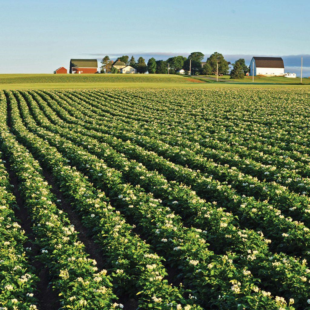 Manzate Max fungicide registered in Canada