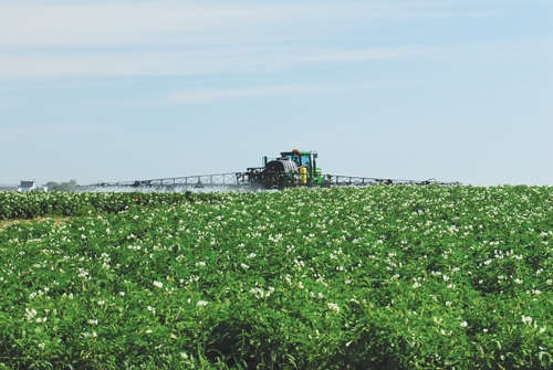 Pesticide re-evaluation update: Group M fungicides and neonics